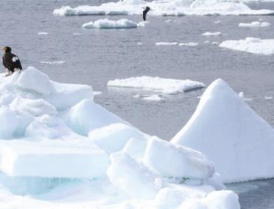 Sea ice condition chart